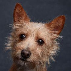 Dog Photos, Corgi, Instagram, Animals, Dog Stuff, Cute Puppies, Corgis, Animales, Animaux