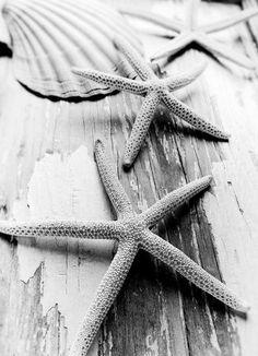 Items similar to Starfish Sea Shell Art Print Nautical Decor Beach Home Wall Art Beach Cottage Shabby Chic Black White Sepia Photo Autumn Coastal Prints on Etsy Cottages By The Sea, Beach Cottages, Shell Beach, Ocean Beach, Beach Bum, Summer Beach, Monica Matos, Toile Photo, Sea Photography