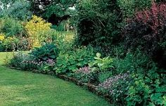shady ground covers
