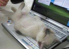 Animali che dormono nelle posizioni più strane - Corriere.it