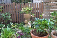 2012年4月のブログ記事一覧-Haruの庭の花日記 Haru's Garden Diary