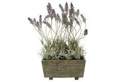 Traumhaft schön und genau so pflegeleicht!  Der künstliche Lavendel bringt frische Farben in Ihren Wohnraum und verzaubert das ganze Jahr über.  Sie können die Kunstblume vielseitig dekorieren und kombinieren.  Das Arrangement ist aus textilen Materialien gefertigt und wirkt auch noch auf den zweiten Blick täuschend echt.  Die Lavendelpflanze ist dekorativ in einem Holzgefäß eingebettet.  Maße ...