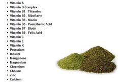 Yerba Mate contains practically all of the vitamins necessary to sustain life. - Dr. Mowrey