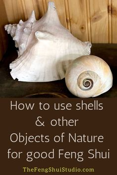 Feng Shui encourages us to use shells and other Objects of Nature to boost energy in our homes for good Feng Shui. Feng Shui Studio, Feng Shui House, Feng Shui Master, Feng Shui Bedroom, Feng Shui Basics, Feng Shui Tips, Feng Shui Earth Element, Feng Shui Objects, Antler Light Fixtures