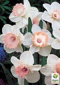 """Нарцисс """"Salome"""" 1шт28 Луковичные Цветы, Нарциссы, Букет Нарциссов, Цветок Кактуса, Красивые Цветы, Белые Цветы, Весенние Цветы, Сила Цветов"""