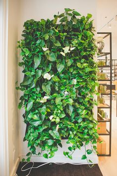 Pin by Emilce Alvarez on casa nueva Indoor Garden, Indoor Plants, Home And Garden, House Plants Decor, Plant Decor, Vertikal Garden, Grow Home, Vertical Garden Wall, Hanging Plant Wall