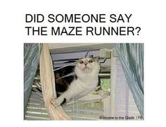 """Yup. Whenever I see things like this, I imagine someone saying it, and the I jump through their window and be like """"DID SOMEONE SAY MAZE RUNNER??"""""""
