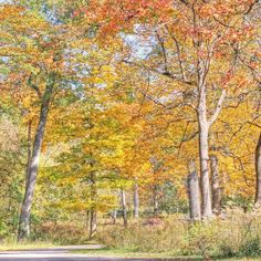 {Autumn in the Midwest} I took this photo a few years ago at this same time in the woods near my house. by frenchlarkspur