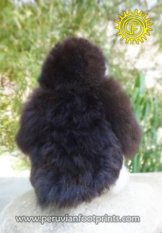 Steiff PENGUIN Stuffed Animals | Alpaca Toy ❤ Stuffed Animal » www.peruvianfootprints.com Alpaca Toy, Suri Alpaca, Baby Alpaca, Alpaca Stuffed Animal, Stuffed Animals, Handmade Toys, Dog Toys, Penguins, Fur Babies