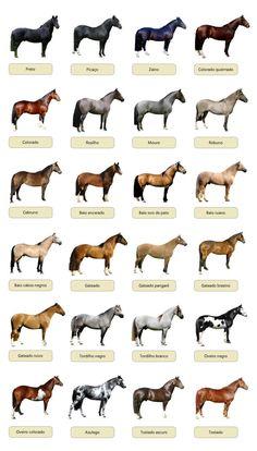 Buy A Horse, Horse Love, Pretty Horses, Beautiful Horses, Farm Animals, Funny Animals, Horse Markings, Horse Anatomy, Gypsy Horse