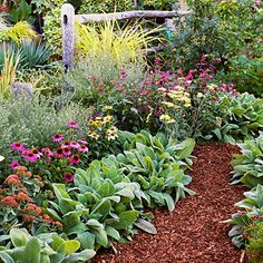 4 Easy-Care Flower Bed Ideas - Sunset