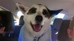 Veri aMICI: Gioia dei cani adottati nel primo viaggio verso casa