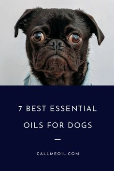 essential oil blend mucus essential oil diffuser blends for high blood pressure Essential Oils For Migraines, Essential Oils Dogs, Organic Essential Oils, Essential Oil Diffuser, Essential Oil Blends, Rose Oil Benefits, Oils For Dogs, Aromatherapy Oils, Oil Uses