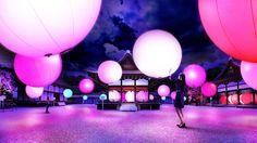 呼応する球体 - 下鴨神社 糺の森 / Resonating Spheres – Forest of Tadasu at Shimogamo Shrine | teamLab / チームラボ