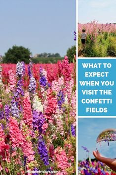 What to expect when you visit the Confetti Fields Ireland With Kids, Family World, Couples Vacation, Family Days Out, England And Scotland, Worldwide Travel, Pretty Photos, Ways To Travel, Worcester