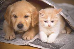Cerca de 400 cães e gatos estarão na festa de adoção realizada pelo Centro de Controle de Zoonoses (CCZ) no próximo sábado, 17.