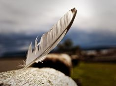 Feather by ~neolith-studios