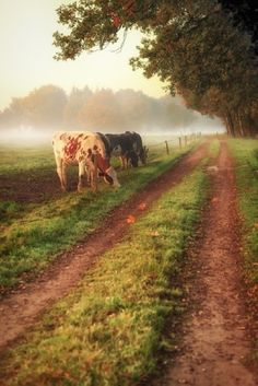 On a back road in Vorselaar, Belgium...hope to visit here one day to see one of my favorite photographers Gigi Embrechts.
