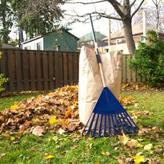 Raking is a fall task that, love it or hate it, has to be done. These tips will help you achieve more efficient raking.