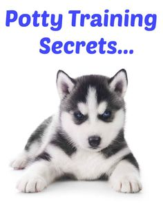 Want to learn a few puppy potty training secrets? Learn these and many other dog training secrets using these hands-off methods. Click here to read more>> www.dog-names-and-more.com/hands-off-dog-training.html