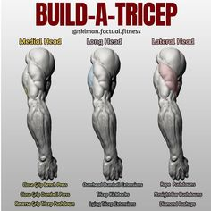 "Did you know that your triceps make up roughly 66% of your arms?⠀First off let's give you some info on how the tricep is broken down, there's three parts to the tricep, hence ""tri"". As your triceps become stronger with these exercises, the strength and stability of your shoulders and elbows increase. The functionality, flexibility and range of motion of your arm increases the more you work and strengthen these muscles. One heavy triceps workout per week is generally enough."
