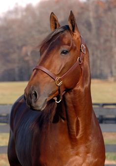 The great Standardbred stallion, Rocknroll Hanover. 26 starts15 wins  Career earnings over 3 million. Horse of the Year. Progeny have earned close to 40 million .