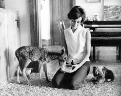 Audrey Hepburn at home with her pet deer, Ip, and her jealous Yorkshire Terrier, Mr. Famous, Beverly Hills, California, 1958.  Photograph by Bob Willoughby. Ip lived with Audrey weeks before filming Green Mansions, so that the two had time to bond.