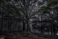 Fog Wrapping by JOGdSAN