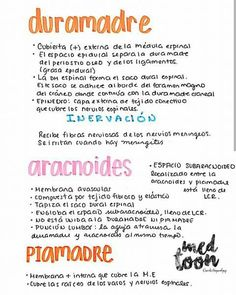 Nacho Redondo García's media content and analytics Medicine Notes, Medicine Student, Rn School, Medical Anatomy, Med Student, Good Notes, Anatomy And Physiology, Study Notes, Study Motivation