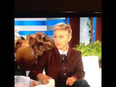 ELLEN'S GREATEST LESSONS-How does Ellen stay in shape?