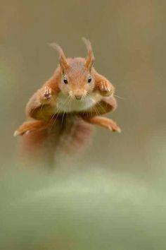 Squirrel - a -bunga