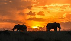 A snapshot of the Best National Parks in Africa, found in the 7 Best African Safari Countries. From the legendary Masai Mara in Kenya to Namibia's dramatic Etosha Park and wild South Luangwa in Beautiful Sunset, Beautiful Places, Most Beautiful, Oh The Places You'll Go, Places To Visit, Diani Beach, African Sunset, African Safari, African Animals