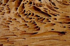 "Check out my art piece ""Naturally Grooved"" on crated.com #art #photography #abstract #wood #cypress"