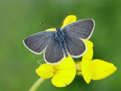Small Blue Butterfly, Orange, Blue, Butterflies, Caterpillar