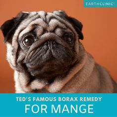 Borax for Mange - Ted's Dog Mange Cure - Earth Clinic Puppy Care, Pet Care, Dog Mange, Mites On Dogs, Dog Nail Clippers, Cat Care Tips, Pet Tips