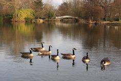 The park I grew up in. Ile Des Ibis in Le Vesinet, France.