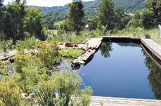 eco natural swimming pool