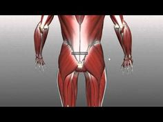 Muscles of the Gluteal Region - Part 1 - Anatomy Tutorial