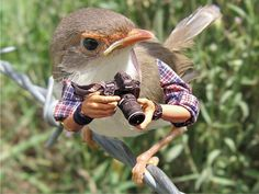 Birds With Arms 01 - this tumblr is hilarious to me and I have no idea why.