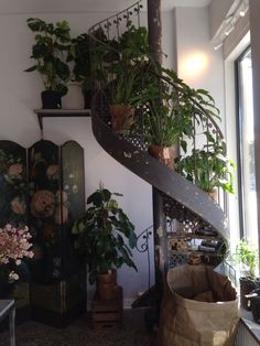 Frøken Flood Blomster Houseplants, I Shop, Shopping, Home, Design, House, Indoor House Plants, Homes, Design Comics