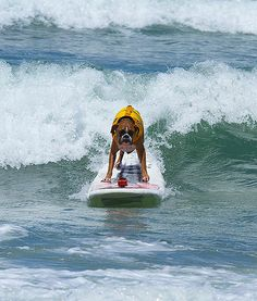 2013 Loews Surf Dog Competition Unleashed by Petco