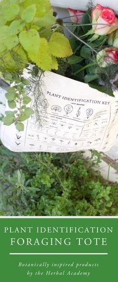Make your next foraging trip extra special and successful with this Plant Identification Foraging Tote Bag from the Herbal Academy. Made of 100% organic cotton and completed with an inside pocket to hold your favorite field guide or tablet plus an large open main compartment to stash all your finds!