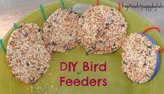 Bird Feeders From Plastic Lids - FSPDT