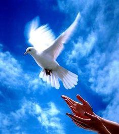 RT I declare world peace. Paz Interior, Pigeon, Coeur Gif, Archangel Uriel, Saint Esprit, Peace Dove, Jesus, White Doves, Peace On Earth