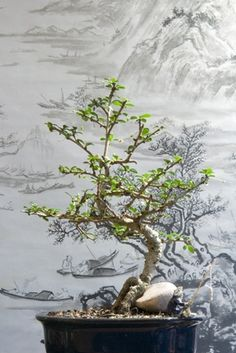 How to Make Wire Ming Trees