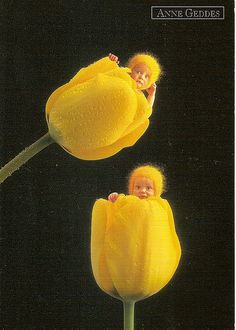 anne geddes postcards for trade Anne Geddes, Nature Pictures, Baby Pictures, Baby Photos, Fairytale Creatures, Mellow Yellow, Color Yellow, Baby Art, Newborn Photos