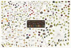 The Various Varieties of Vegetables