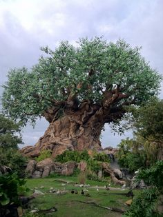 WDW Animal Kingdom Tree of Life
