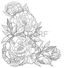 peonies petals: Bouquet with ornate peony flower and leaves isolated on white background. Floral elements in contour style.