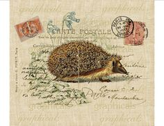 Hedgehog Paris Carte Postale Digital download image for Iron on fabric transfer burlap paper pillows decoupage No. 609